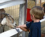 Petting Zoos