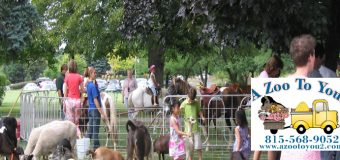 A Zoo To You Pony Wheel Rental
