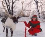 Reindeer Rentals