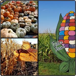 Didier Farms Pumpkin Patch