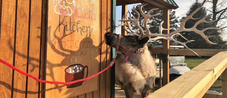Come Visit Our Magical Reindeer at Summerfield Zoo