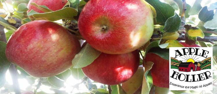 Apple Holler Orchard & Farm