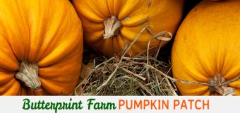 Butterprint Farm Pumpkin Patch