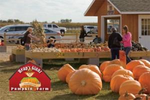 Heaps Pumpkin Farm
