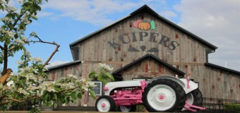 Win Free Tickets To Kuipers Family Pumpkin Farm In Maple Park Illinois