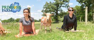 Primrose Farm St Charles Illinois