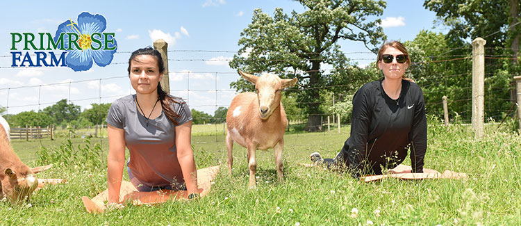Experience Farm Life At Primrose Farm in St Charles