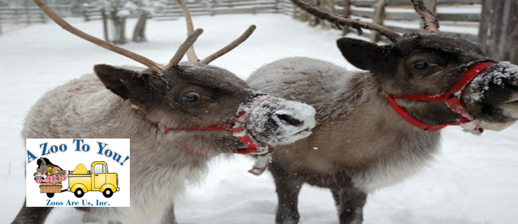 A Zoo To You Reindeer Rentals