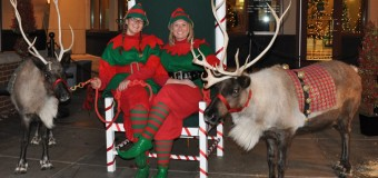 Summerfield Farm Reindeer Rental