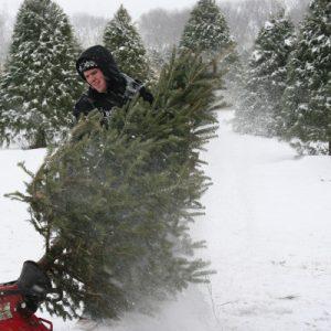 tree_shaking_snow_400x400
